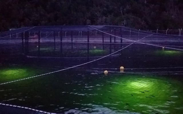 Aquaculture lighting 3